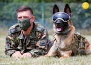 آموزش سگ در ارتش آلمان به منظور شناسایی ویروس کرونا/تصاویر