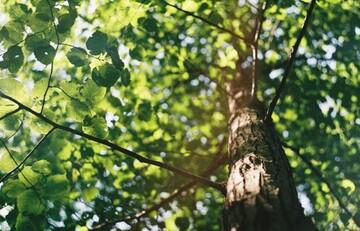 ۷ نکته ای که قبل از کاشت درخت باید بدانید