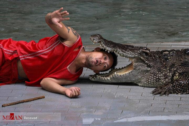 مزرعه تمساحها در تایلند به روایت تصویر