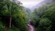 ماجرای قطع درختان ۵۶۰۰ هکتار از جنگلهای هیرکانی