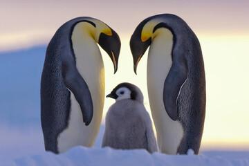 نبرد خونین دو پنگوئن به دنبال خیانت حیوانی + فیلم