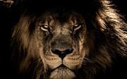 زنده خواری دلخراش و هولناک سلطان جنگل + فیلم