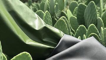 تولید چرم گیاهی از گیاه کاکتوس + فیلم