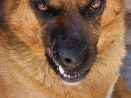 فرار دیدنی یک مرد از حمله سگ خانگی + فیلم