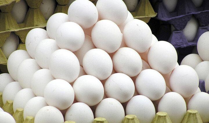 جدیدترین قیمت تخم مرغ در بازار