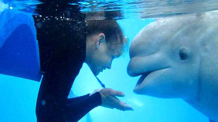 عشق و علاقه باورنکردنی نهنگ ماده به نگهبان خود + فیلم