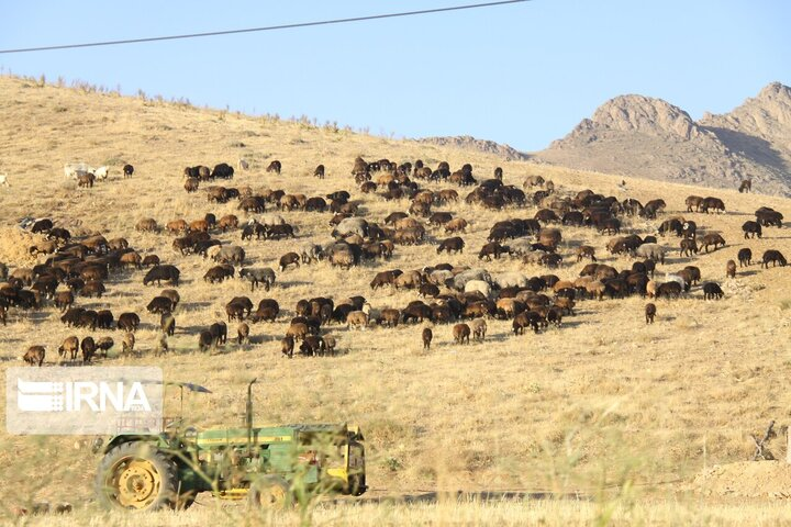 تلف شدن ۱۳۰ راس گوسفند در پی ریزش کوه در ایذه