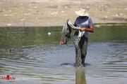 تصاویری از مرگ دردناک ماهیهای زاینده رود