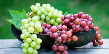 انگور و خواص بینظیرش در جوانسازی پوست