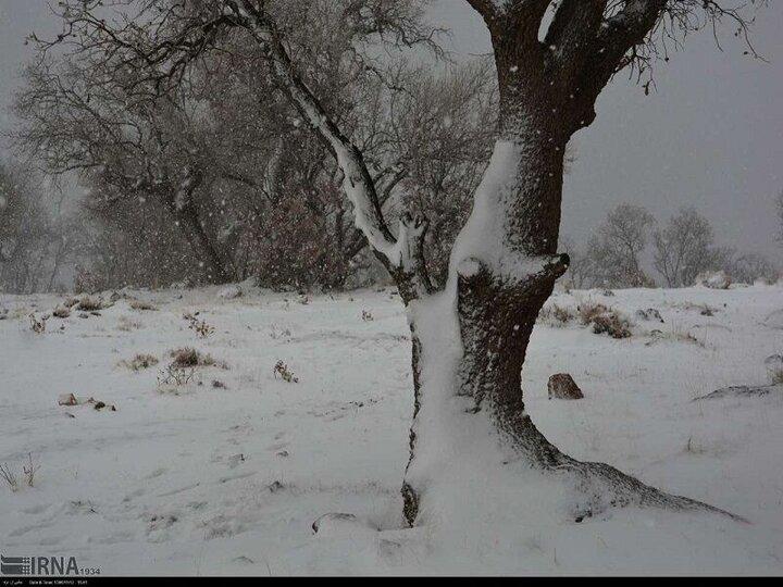 برف پاییزی ارتفاعات خوزستان را سفیدپوش کرد