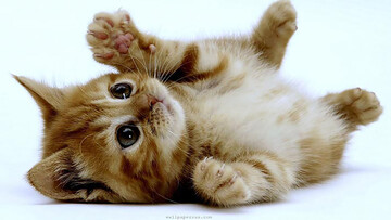 درخواست گربه ماده از یک انسان برای نجات بچهاش + فیلم