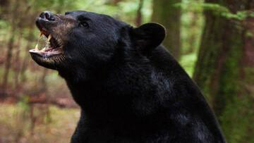 حمله خرس سیرک به مربیاش + فیلم