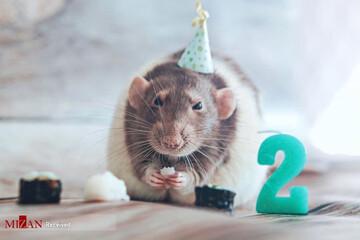 زیباترین و بامزه ترین موشهای جهان + عکس