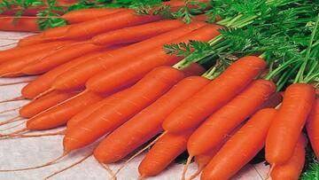 خواص فراوان هویج بر ویروس کرونا + جزئیات
