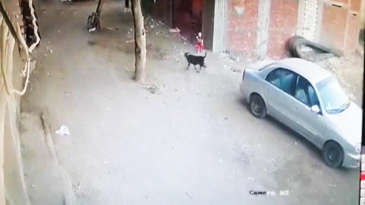 حمله سگ ولگرد به کودک خردسال و نجات توسط گربه! / فیلم