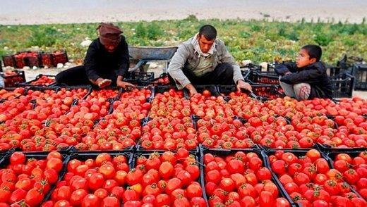 علت گرانی گوجه فرنگی در روزهای اخیر چیست؟
