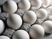 هر شانه تخممرغ به ۳۵ هزارتومان هم رسید