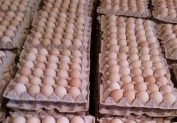 قیمت مصوب هر شانه تخم مرغ چند؟