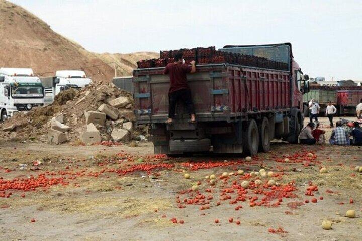 هزاران تن گوجه فرنگی به دلیل برگشت از عراق، نابود شد