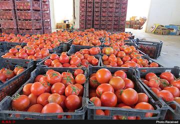 صادارات گوجه و هندوانه به ارزش ۱۰۰ میلیون دلار از ایران به عراق