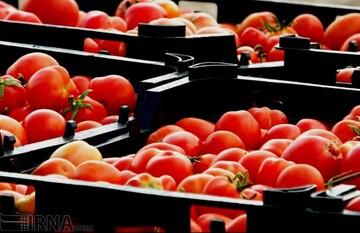 ماجرای معطلی ۹۰۰ کامیون حامل گوجه فرنگی در مرز عراق