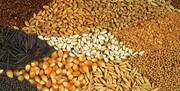 افزایش قیمت گندم در بازارهای جهانی