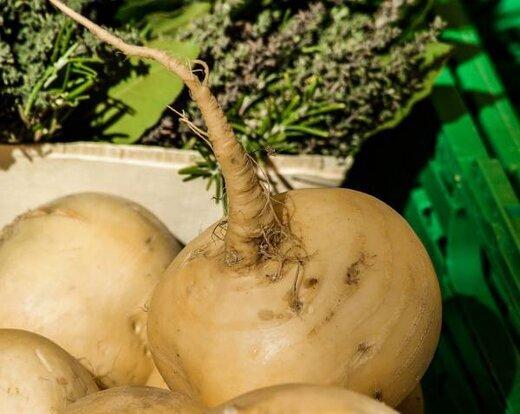 شلغم؛ بهترین آنتی بیوتیک گیاهی