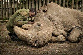 زیباترین عکس های حیاتوحش از نگاه مردم / تصاویر