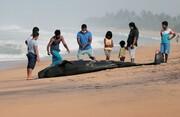 عکسهایی از تلاش بی ثمر برای نجات یک نهنگ
