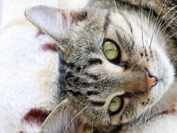 عکس عجیب و دیده نشده از گربه عینکی