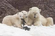 نجات خرس و تولههایش از استخر/فیلم