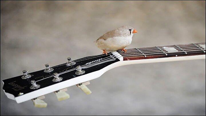 گنجشکی که عاشق صدای گیتار است / فیلم
