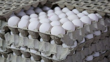 قیمت تخممرغ چند نرخی شد/ درشتی و کوچکی بهانهای برای چند نرخی شدن