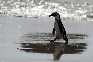 حمایت اردک ها از پنگوئن / فیلم