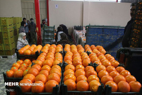 جدیدترین قیمت انواع میوه و صیفی در بازار