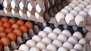 قیمت جدید و مصوب هر شانه تخممرغ چند؟