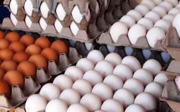 بازی قیمت مرغ و تخممرغ تمامی ندارد؛ تخممرغ هم دو نرخی شد!