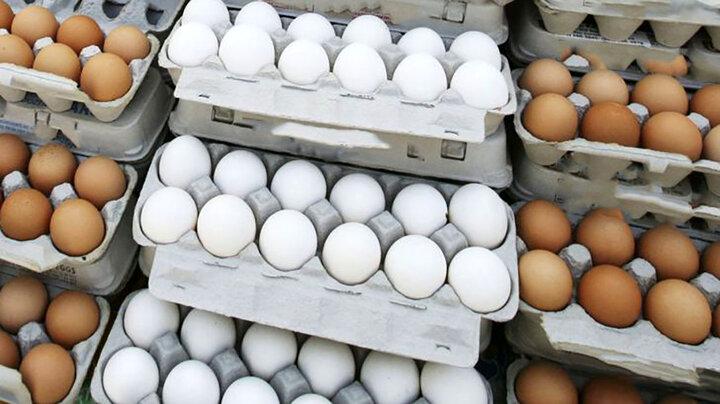 قیمت روز تخم مرغ در بازار
