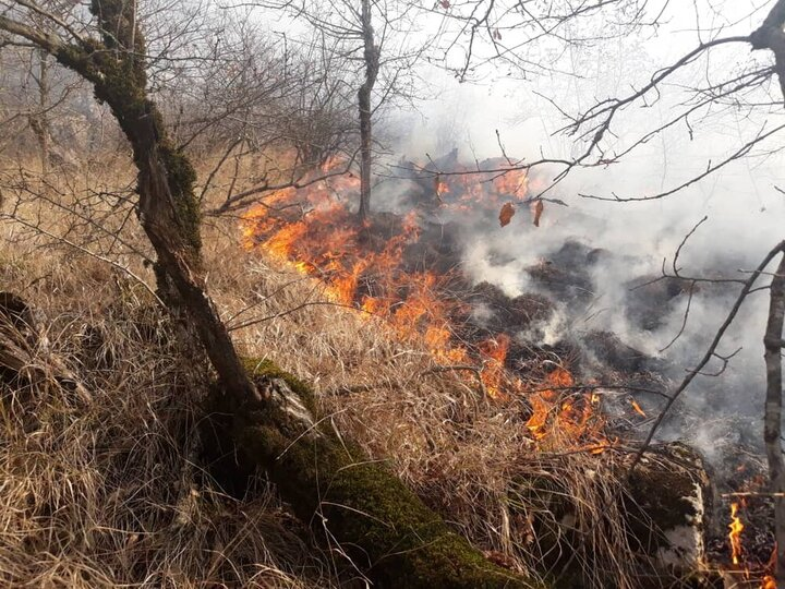 آتش سوزی گسترده در پارک ملی گلستان