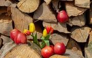 میوه معجزهآسا برای درمان سردرد