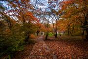 تصاویری چشم نواز از پارک جنگلی ساری در زمستان