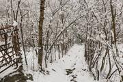زمین گیر شدن ماشینها در برف و کولاک ورزقان / فیلم