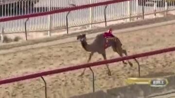 لحظه مرگ حیوان در جریان مسابقه/ فیلم
