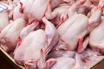 مرغ باز هم گران شد/ هر کیلو مرغ گرم چند؟