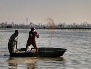 تغذیه قوهای مهاجر در سرخرود مازندران/ تصاویر