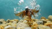شکار ماهی توسط پرنده در زیر آب / عکس