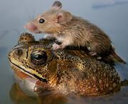 رفاقت عجیب و باورنکردنی حیوانات در طبیعت / تصاویر