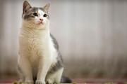 حمله عجیب گربه وحشی به سگی بیآزار / فیلم