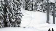 حمله خرس قهوه ای به مرد اسکی باز / فیلم