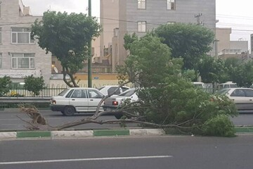 مرگ دلخراش زن مرندی بر اثر سقوط درخت/ عکس